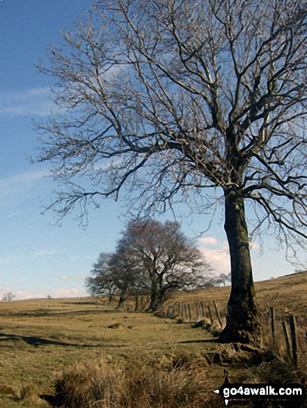 The Lancashire countryside near Easington Brook