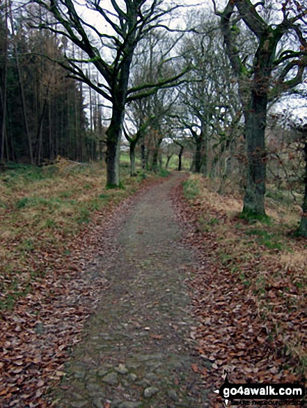 Crookland Wood near Langsett Reservoir