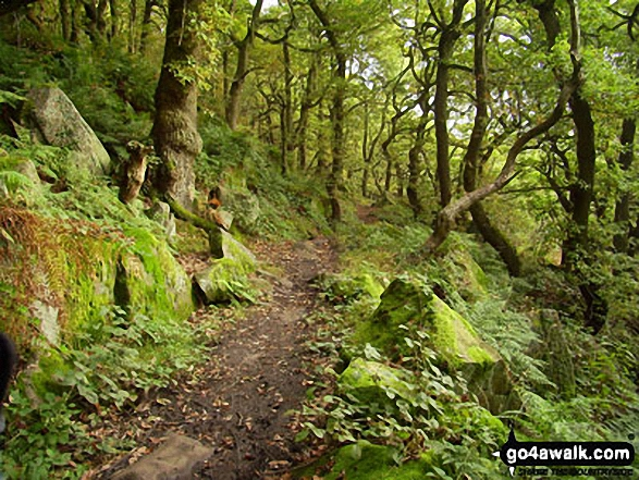 Woodland near Curbar Edge
