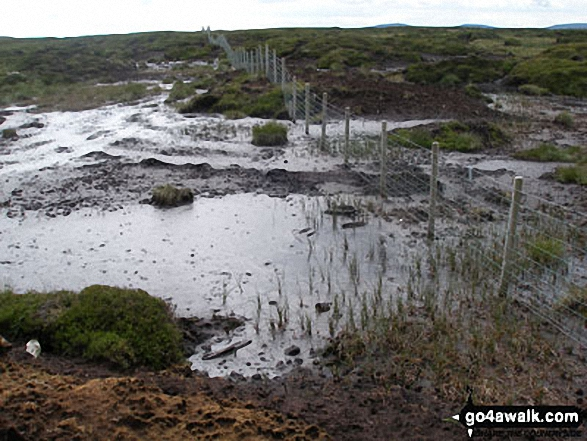 Boggy ground between Scaud Hill and Redgleam (Harwood Common)