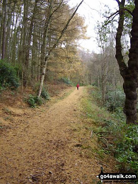 Pettypool Wood