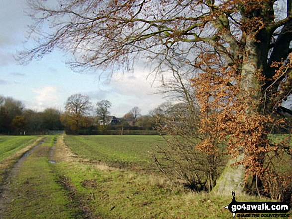 The Cheshire Countryside near Holford Hall