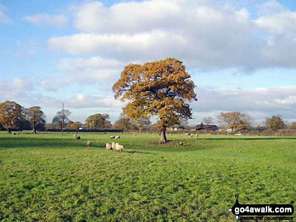 Walk ch177 Holford Hall and Royd Wood from Plumley - The Cheshire Countryside near Holford Hall