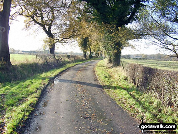 Walk ch177 Holford Hall and Royd Wood from Plumley - Cheshire Country Lane near Royd Wood, Plumley
