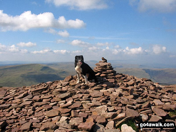 My Dog 'Skye' on the summit of Corn Du