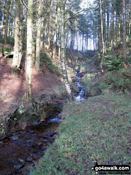 Beeley Brook in Hell Bank Plantation, Beeley
