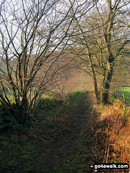 Green lane below Smeltingmill Wood near Beeley