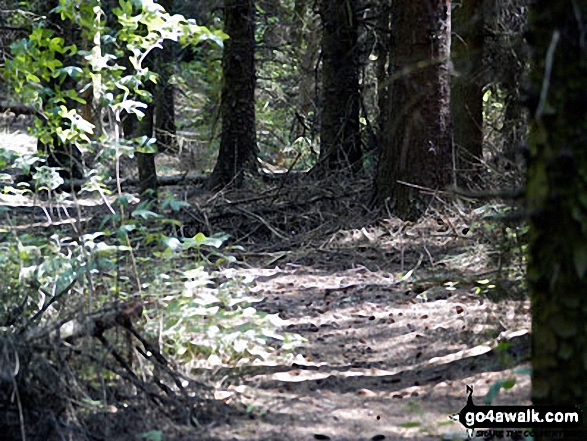 Walking through woodland on the banks of Langsett Reservoir