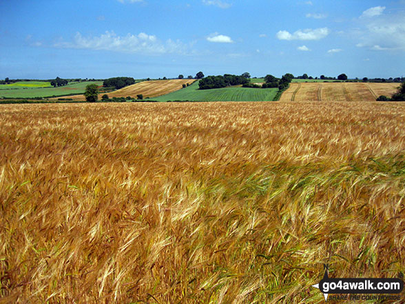 Walk ny190 Appleton-le-Moors from Hutton-le-Hole - Fields near Appleton-le-Moors