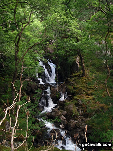 Waterfall from The Minffordd Path in woodland below Ystrad-gwyn. Walk route map gw103 Cadair Idris (Penygadair), Cyfrwy and Gau Graig via The Minffordd Path photo