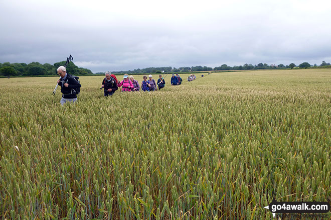 Chester Rambling & Hillwalking Club walking through fields near Myddle