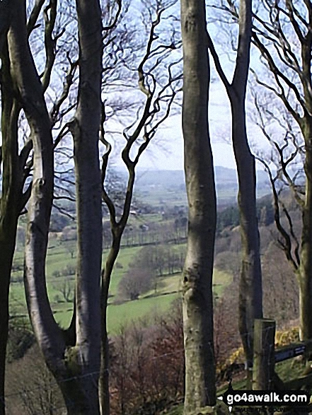 Bretton Clough through the trees