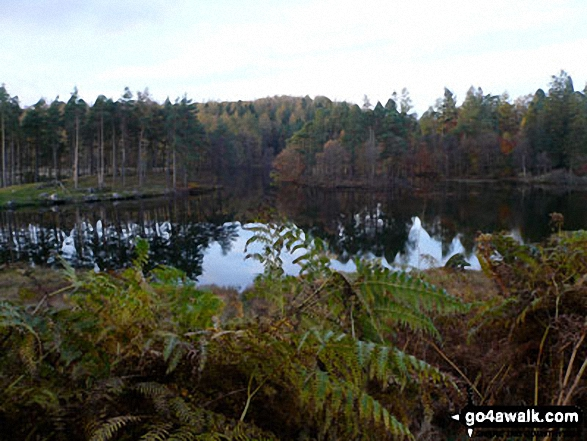 Tarn Hows in November