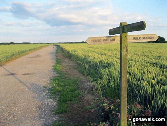 Path Junction near Atherington