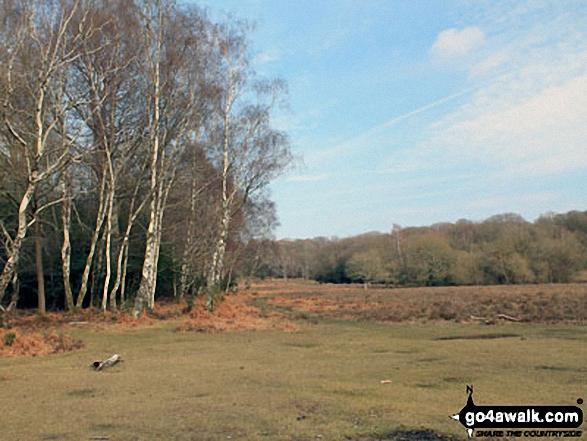 Walk ha109 Lyndhurst Hill and Swan Green from Lyndhurst - Buckhill Hole