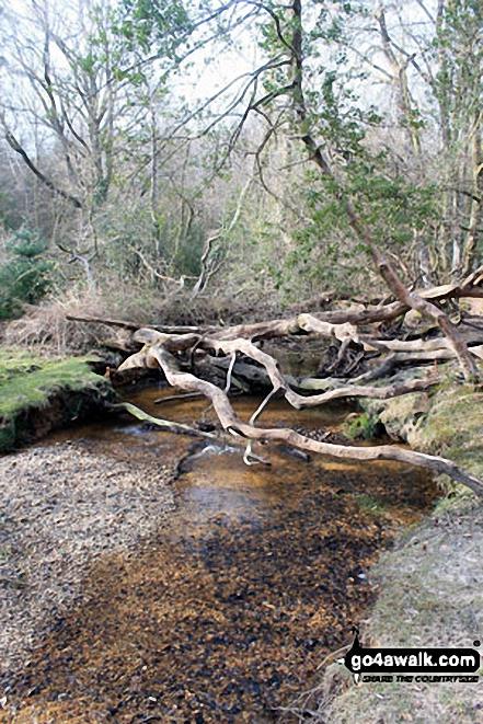 Walk ha109 Lyndhurst Hill and Swan Green from Lyndhurst - Windfelled woodland by Highland Water