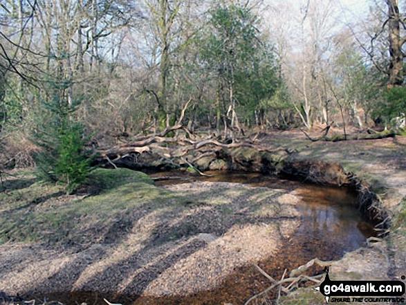 Walk ha109 Lyndhurst Hill and Swan Green from Lyndhurst - Highland Water