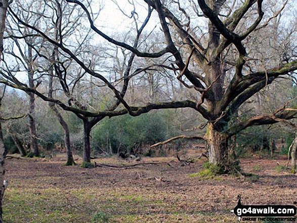 Walk ha109 Lyndhurst Hill and Swan Green from Lyndhurst - On Cut walk