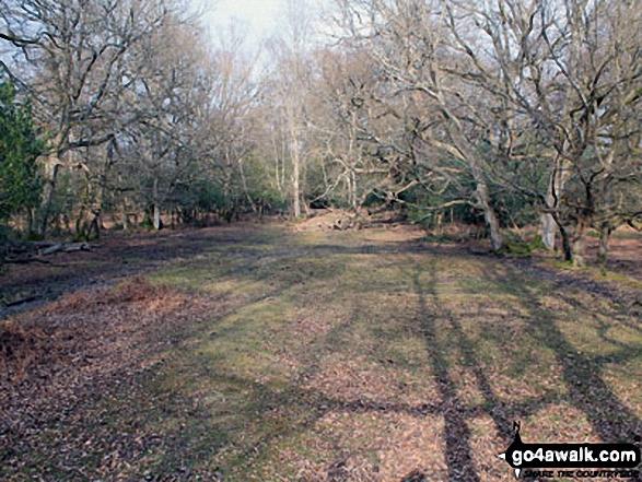 Walk ha109 Lyndhurst Hill and Swan Green from Lyndhurst - Walking Cut walk