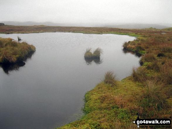 Small Pool on Bellbeaver Rigg (Tynehead Fell)