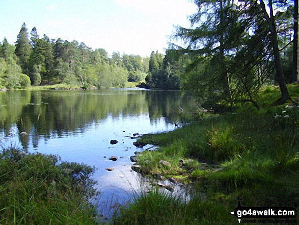 Tarn Hows. Walk route map c353 Holme Fell and Black Fell (Black Crag) from Tom Gill photo