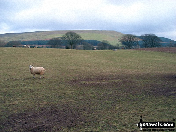 Melmerby Fell from Gamblesby
