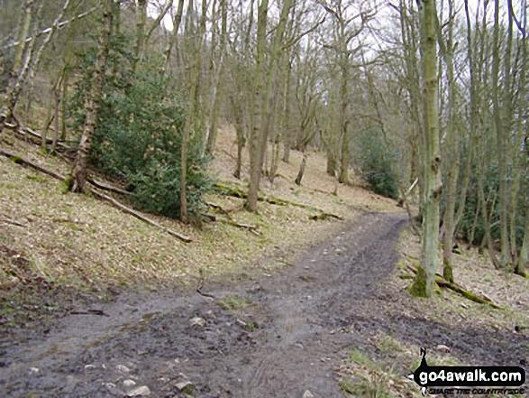 Woodland on the lower slopes of The Wrekin
