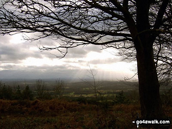 The view from Leith Hill