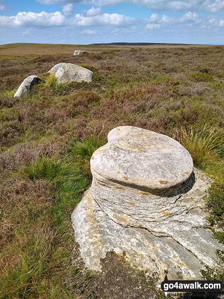 Featherbed Moss (Howden Edge) summit stones