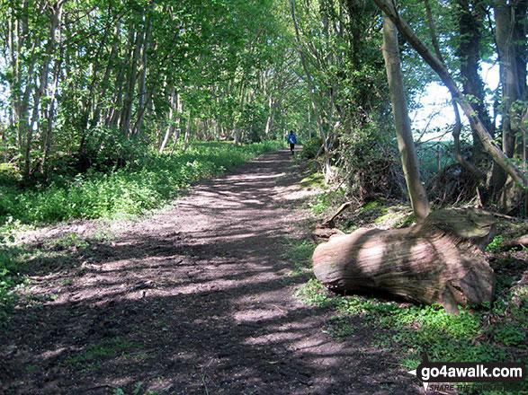 Footpath through Mucklefield Plantation near Worstead
