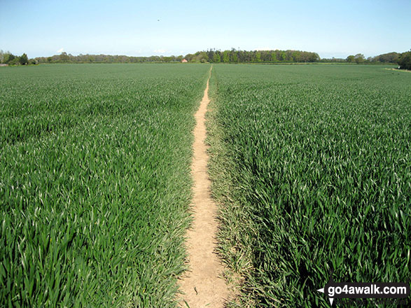Field Path near Worstead