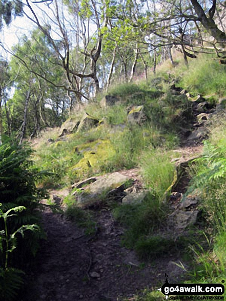Woodland below Froggatt Edge. Walk route map d139 Froggatt Edge, Curbar Edge, The Derwent Valley and Grindleford from Hay Wood, Longshaw photo
