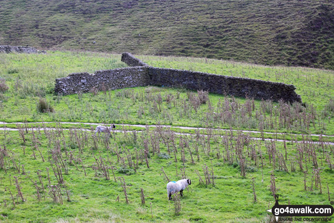 Y shaped section of dry stone wall near Orchard Farm