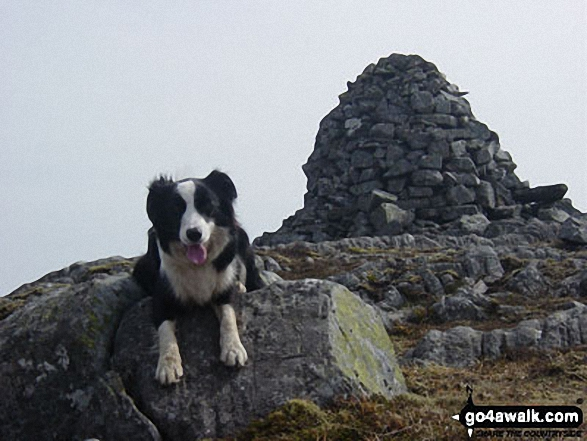 Walk Beinn a' Chuallaich walking UK Mountains in The Drumochter Hills  Perth and Kinross    Scotland