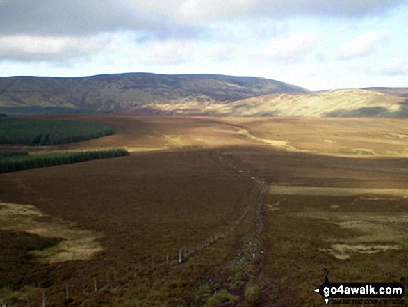 The Cheviot from Bloodybush Edge