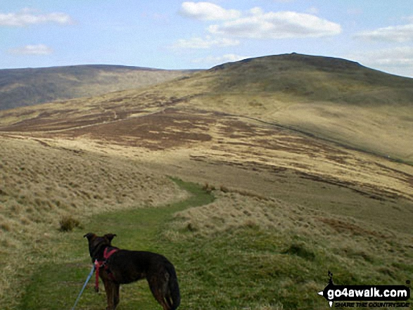 The Schil from the Pennine Way at Black Hag (Hethpool)