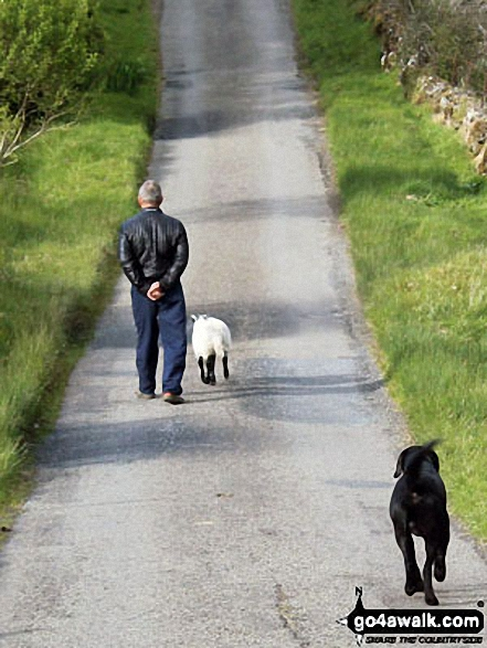 Local man taking his dog and lamb for a walk near Inverlochlarig
