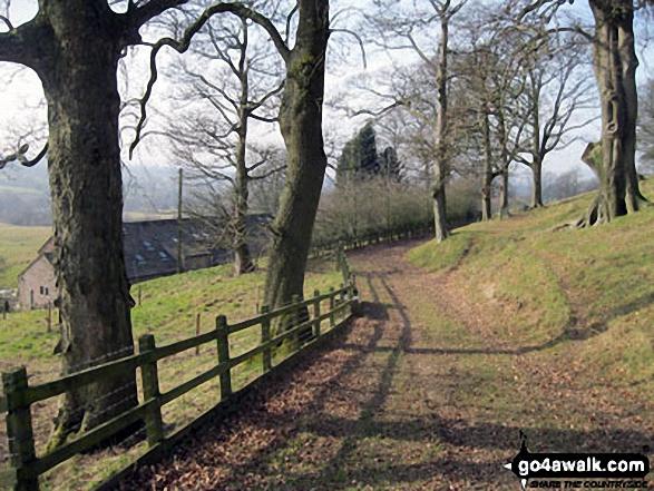Woodland path near Meadows Farm