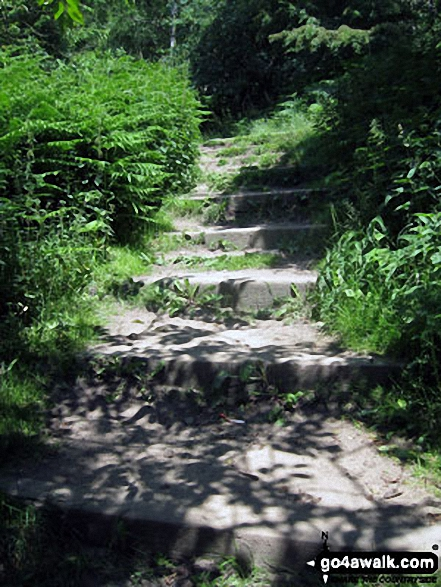 Steps up through woodland towards Birchen Edge