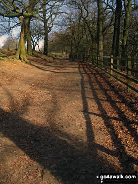 Woodland path above Rivington Hall