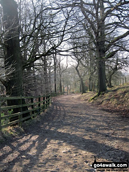 Woodland path above Rivington Cottage