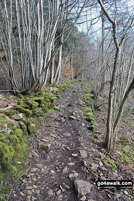 The path through Buckhouse Wood