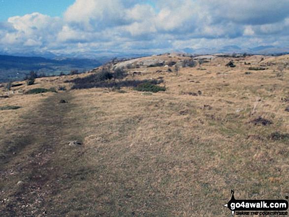 The path across Farrar's Allotment on Whitbarrow Scar