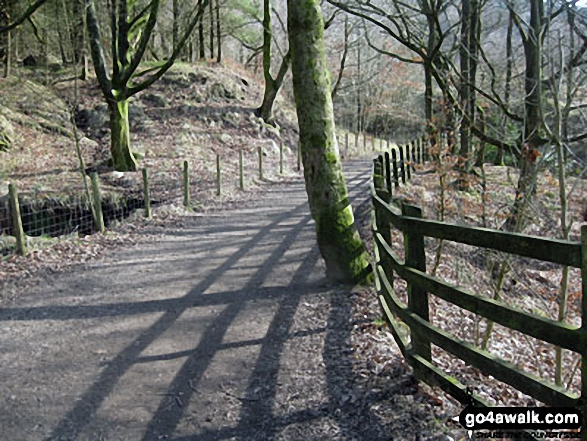 Woodland path above Rivington Upper Barn