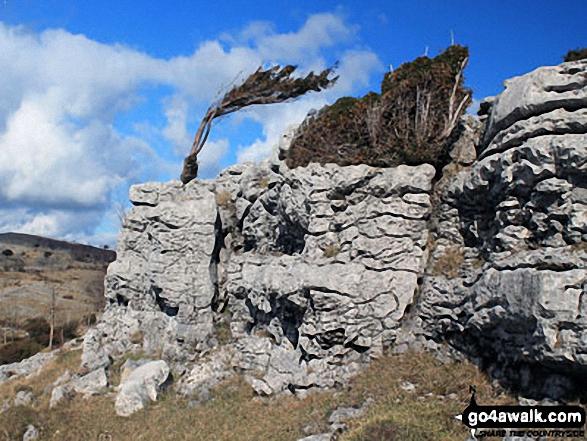 Crags on Flodder Allotment, Whitbarrow Scar