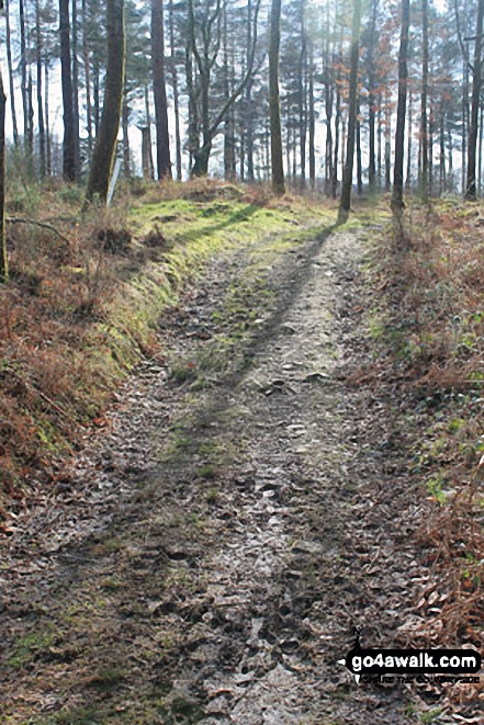 Path through Low Park Wood, Whitbarrow Scar