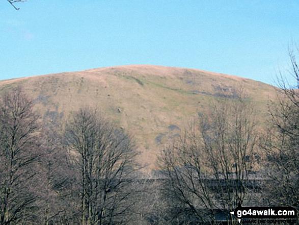 Blease Fell from Borrowdale Wood