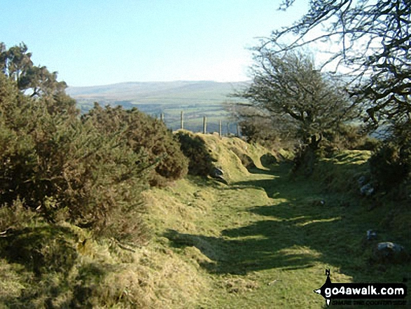 Just North of Sychbant in the Preseli Hills