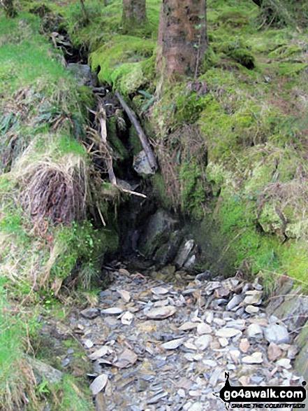 Forest detail in Cwm Penamnen