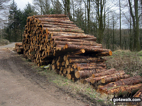 Pile of logs in Macclesfield Forest